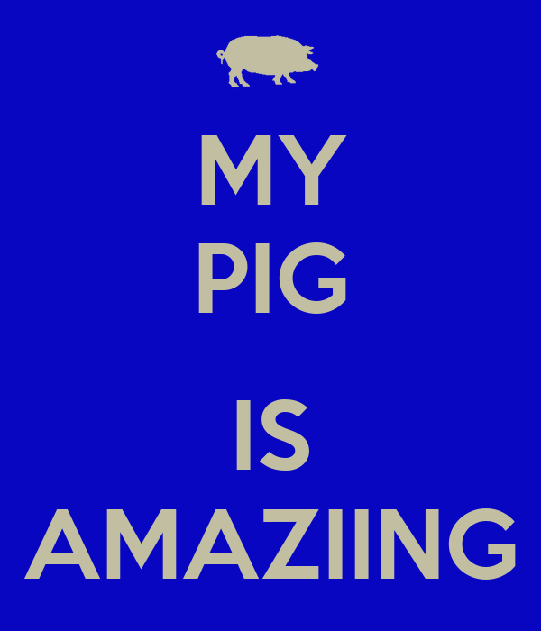 MY PIG  IS AMAZIING