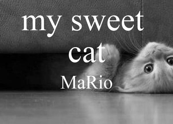 my sweet  cat MaRio
