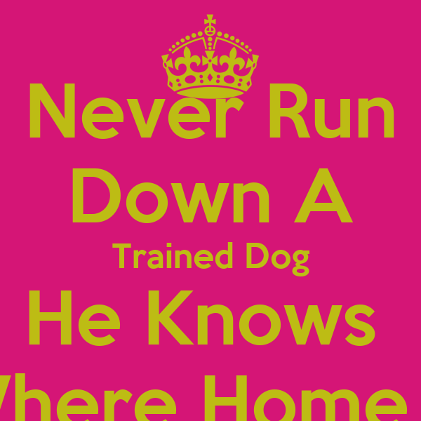 Never Run Down A Trained Dog He Knows  Where Home Is