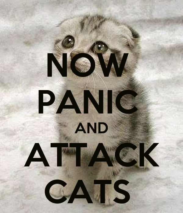 NOW  PANIC  AND ATTACK CATS