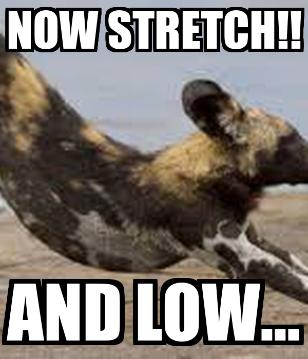 NOW STRETCH!! AND LOW...