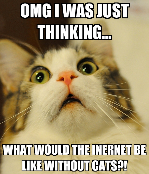 OMG I WAS JUST THINKING... WHAT WOULD THE INERNET BE LIKE WITHOUT CATS?!