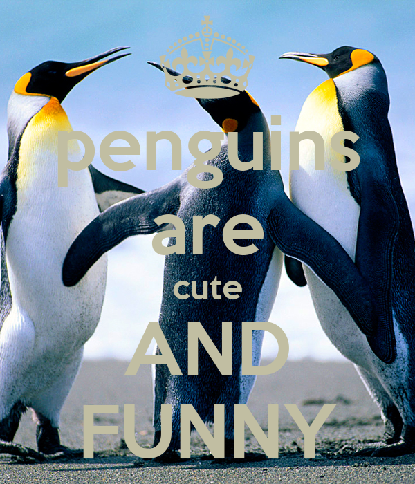 penguins are cute AND FUNNY
