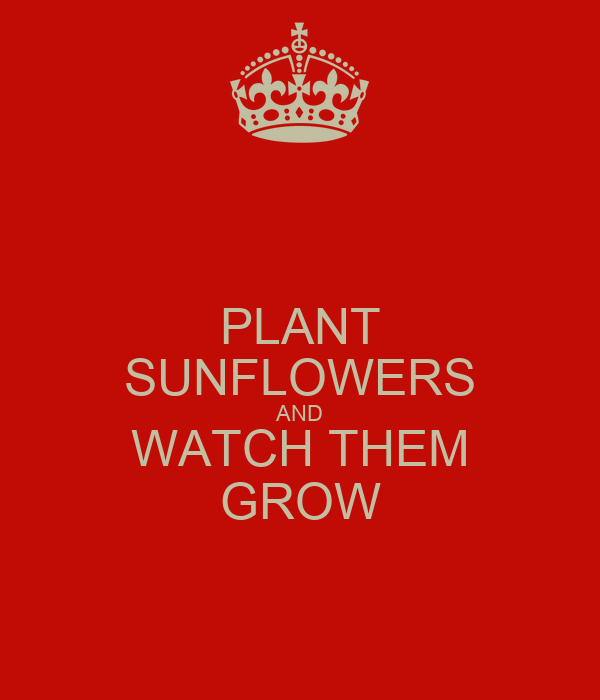 PLANT SUNFLOWERS AND WATCH THEM GROW