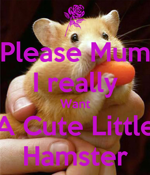 Please Mum I really Want A Cute Little Hamster