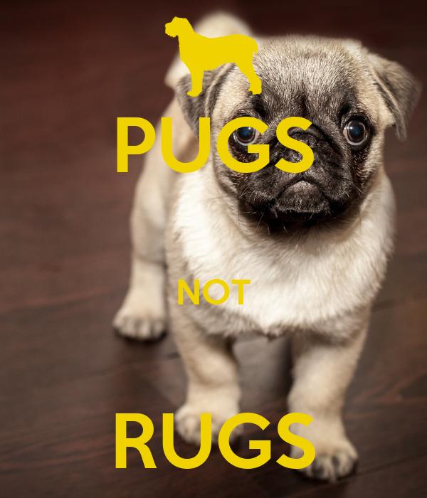 PUGS  NOT  RUGS