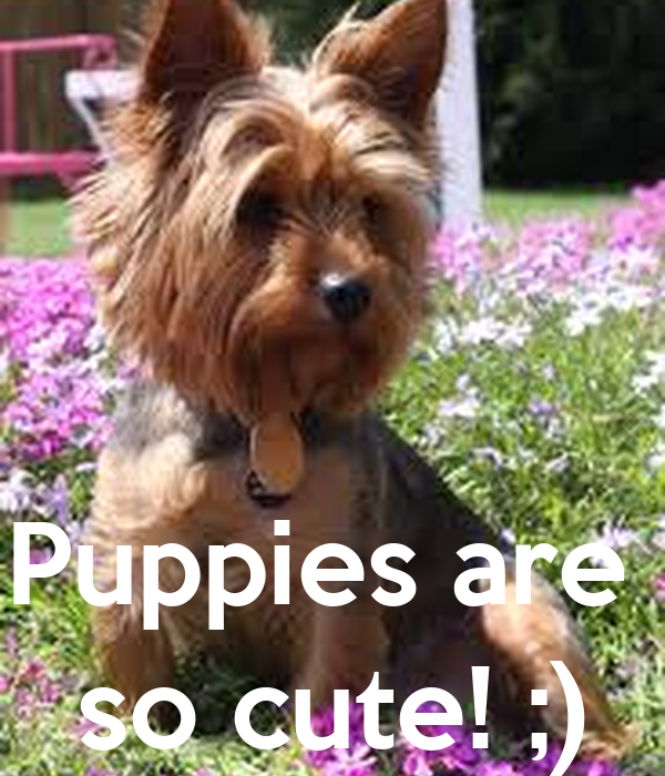 Puppies are  so cute! ;)