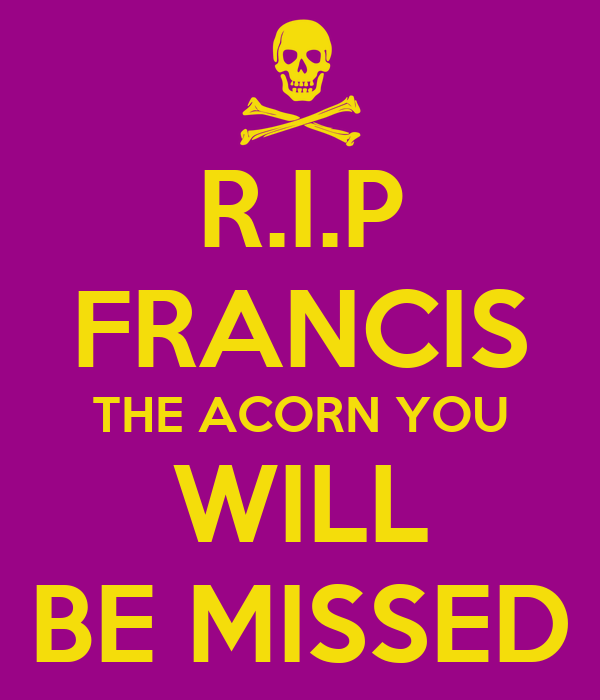 R.I.P FRANCIS THE ACORN YOU WILL BE MISSED