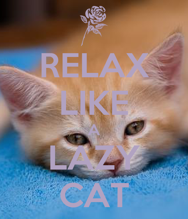 RELAX LIKE A LAZY CAT