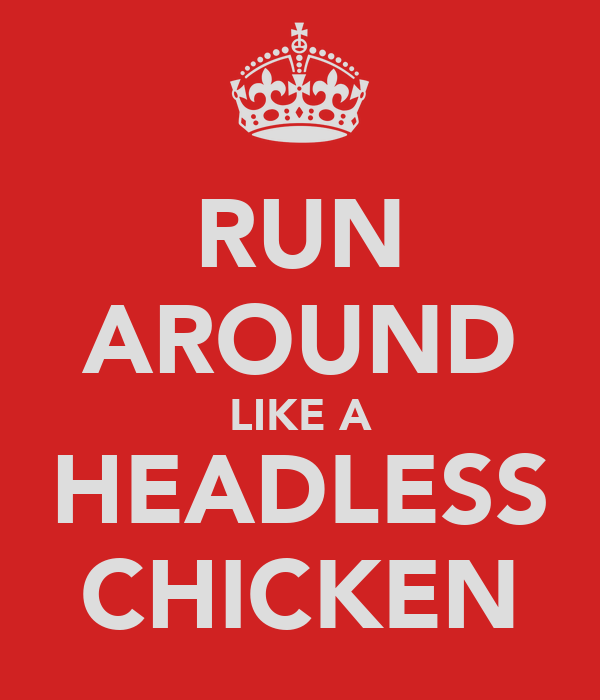 RUN AROUND LIKE A HEADLESS CHICKEN