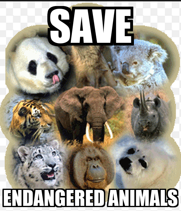 SAVE ENDANGERED ANIMALS Poster