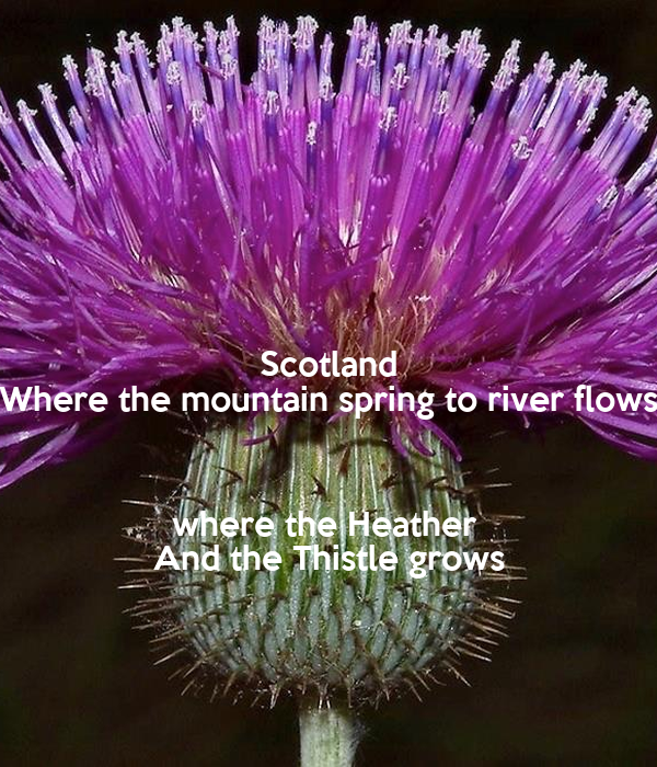 Scotland Where the mountain spring to river flows  where the Heather  And the Thistle grows