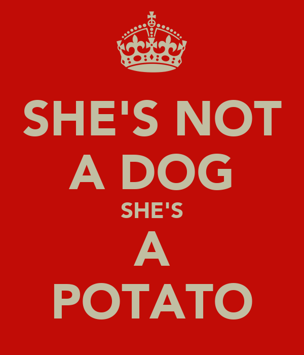 SHE'S NOT A DOG SHE'S A POTATO
