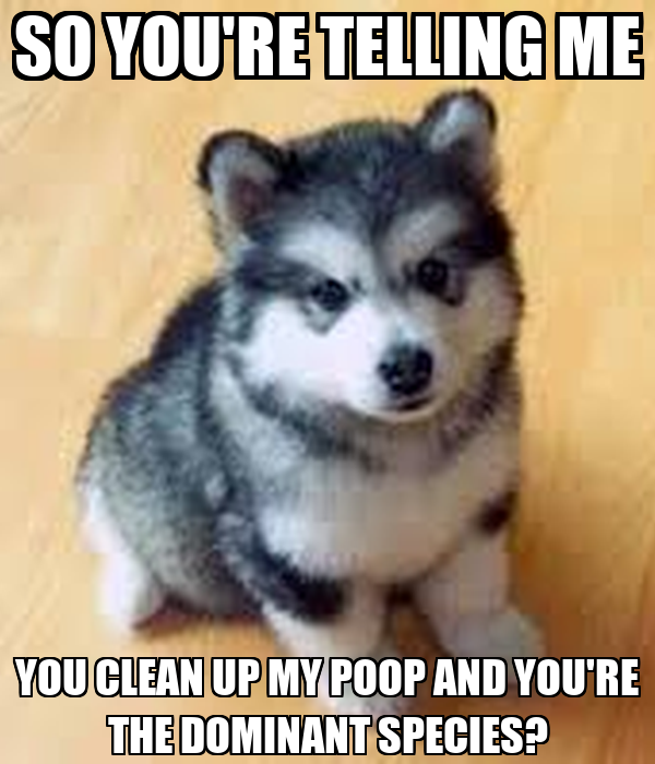 SO YOU'RE TELLING ME YOU CLEAN UP MY POOP AND YOU'RE THE DOMINANT SPECIES?