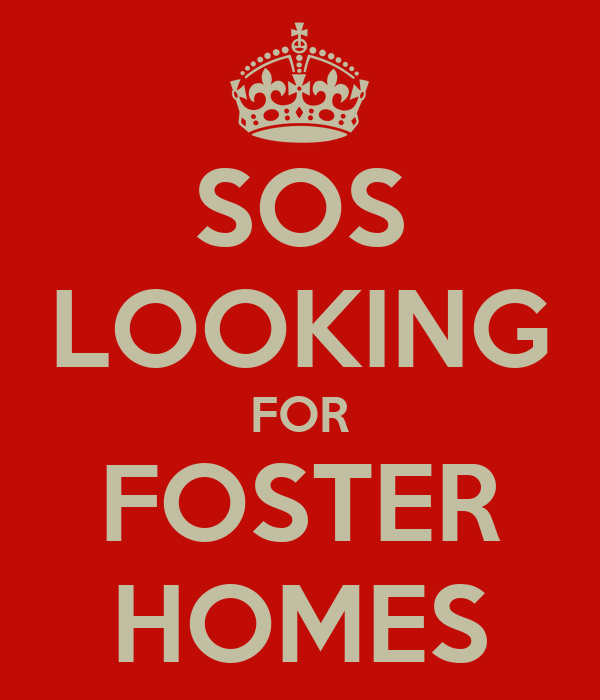 SOS LOOKING FOR FOSTER HOMES