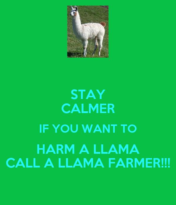 STAY CALMER IF YOU WANT TO HARM A LLAMA CALL A LLAMA FARMER!!!
