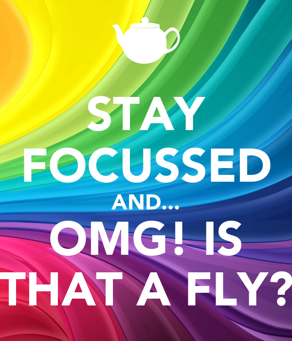 STAY FOCUSSED AND... OMG! IS THAT A FLY?