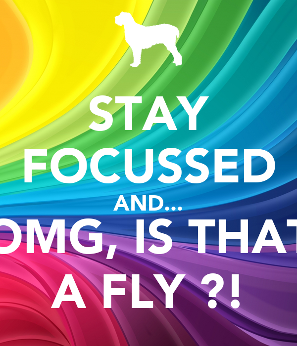 STAY FOCUSSED AND... OMG, IS THAT A FLY ?!