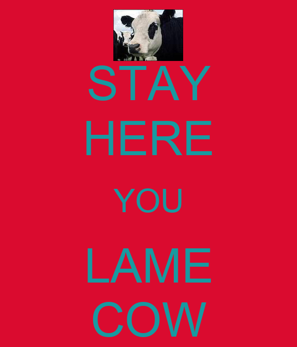 STAY HERE YOU LAME COW