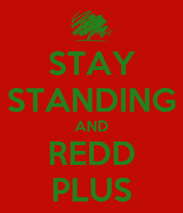STAY STANDING AND REDD PLUS