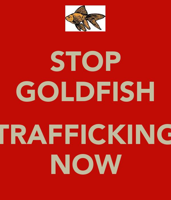 STOP GOLDFISH  TRAFFICKING NOW