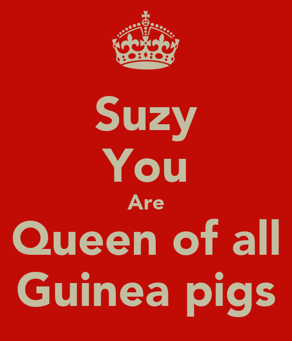 Suzy You Are Queen of all Guinea pigs