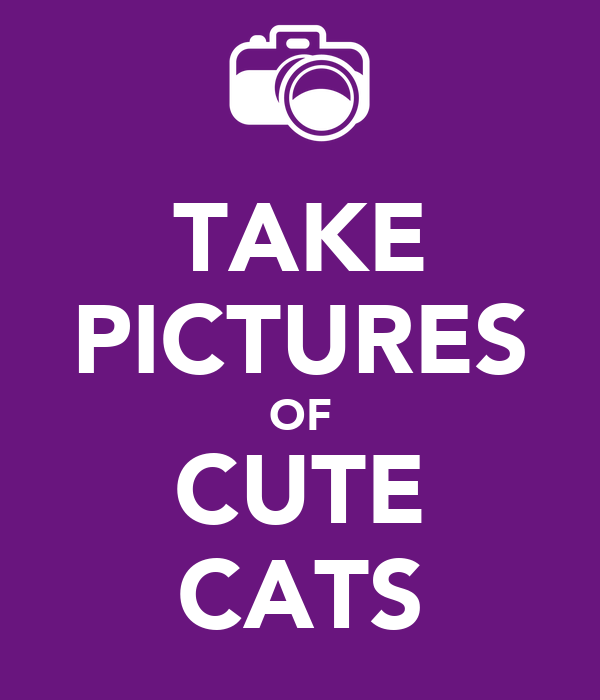 TAKE PICTURES OF CUTE CATS