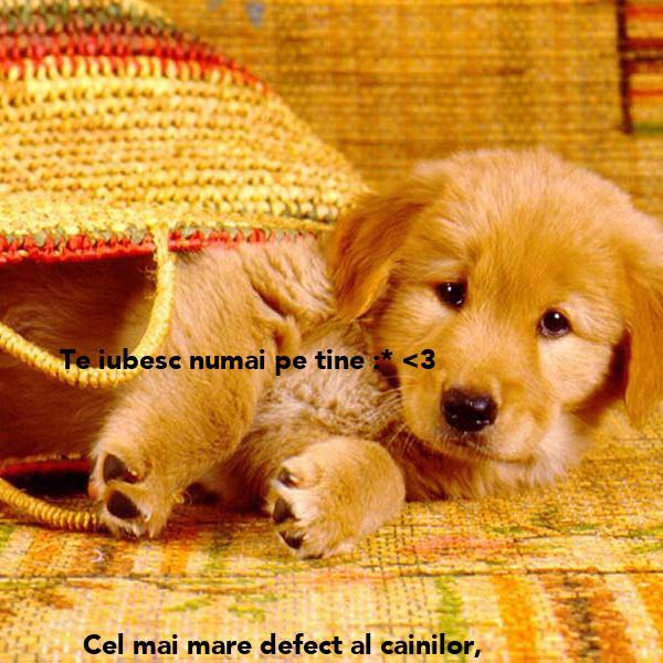 Te iubesc numai pe tine :* <3          Cel mai mare defect al cainilor,          e ca iubesc orice jigodie de om