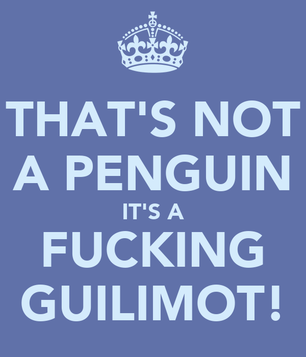 THAT'S NOT A PENGUIN IT'S A FUCKING GUILIMOT!