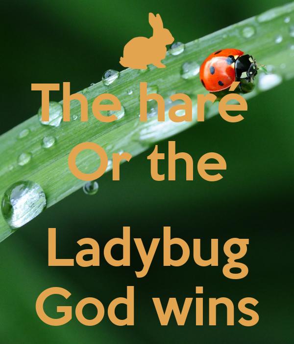 The haré  Or the  Ladybug God wins