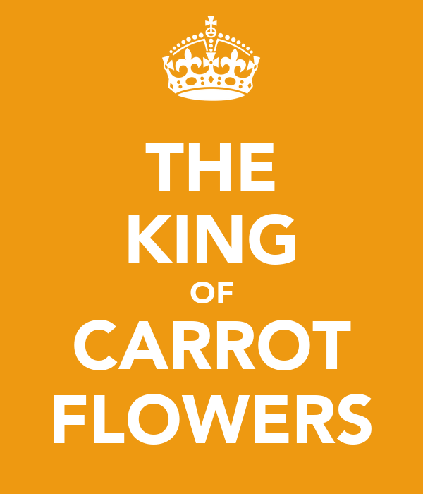 THE KING OF CARROT FLOWERS