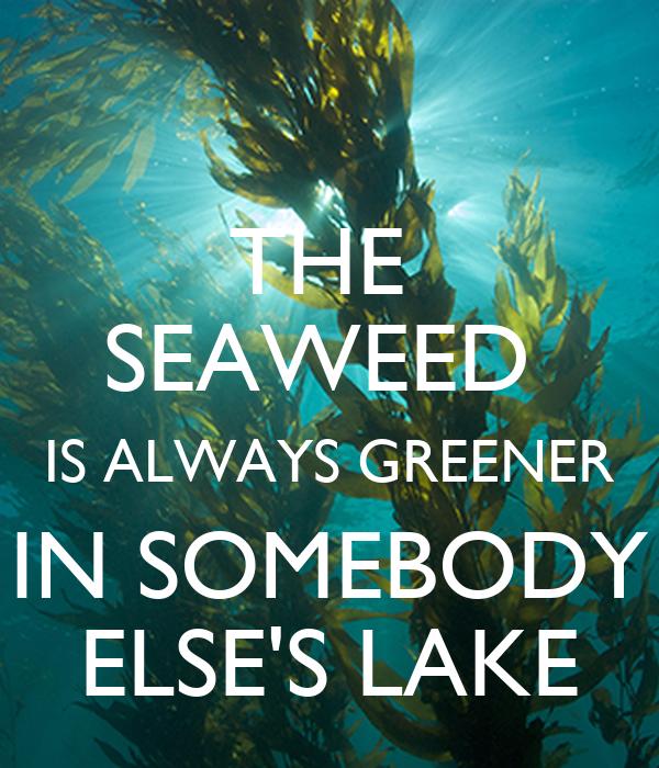 THE  SEAWEED  IS ALWAYS GREENER IN SOMEBODY ELSE'S LAKE