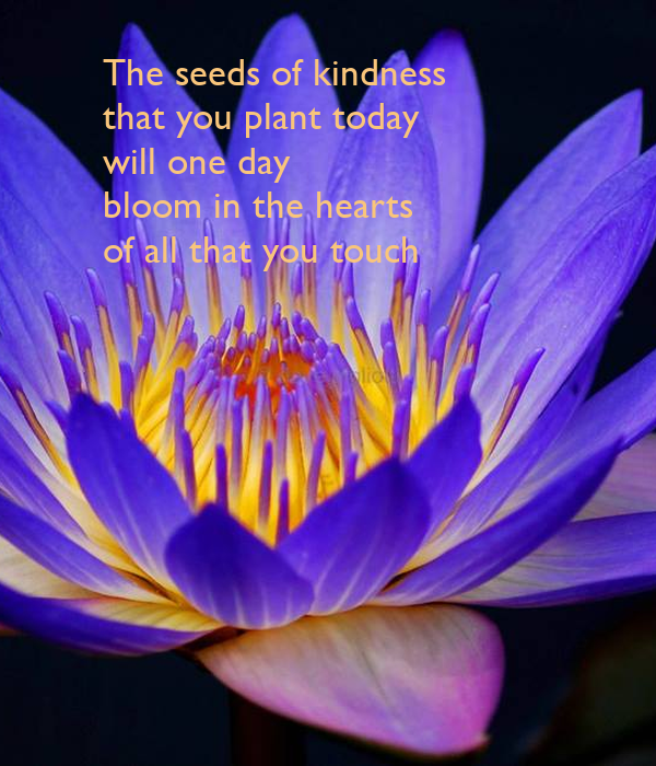 The seeds of kindness      that you plant today      will one day      bloom in