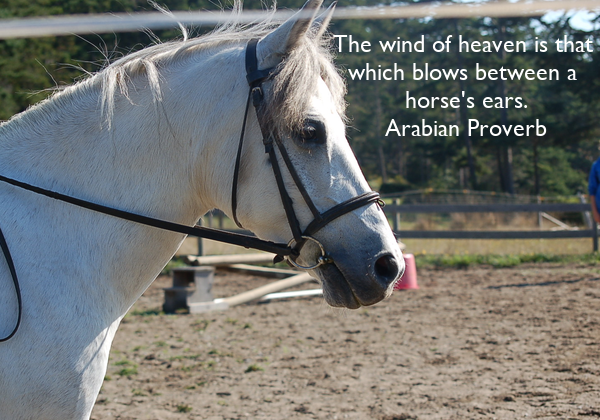 The wind of heaven is that  which blows between a  horse's ears. Arabian Proverb
