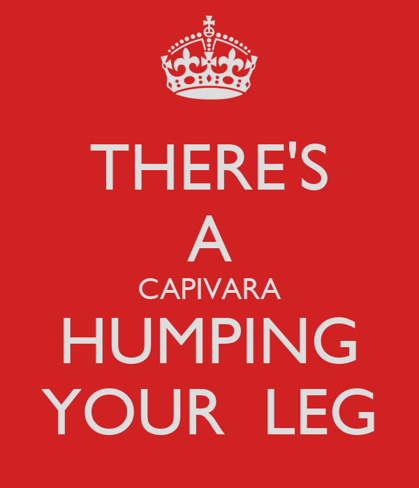 THERE'S A CAPIVARA HUMPING YOUR  LEG