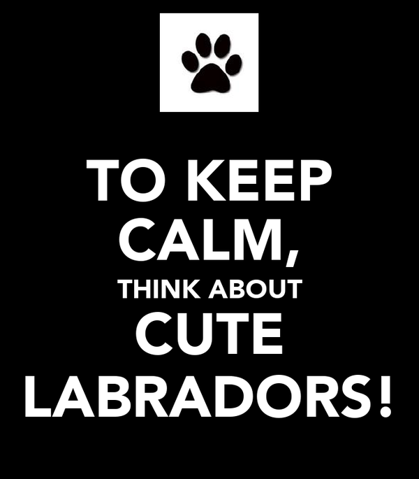 TO KEEP CALM, THINK ABOUT CUTE LABRADORS!