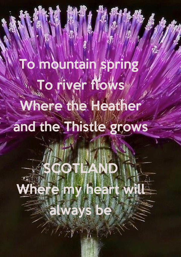 To mountain spring  To river flows Where the Heather and the Thistle grows  SCOTLAND Where my heart will always be