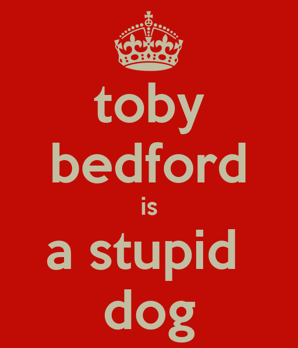 toby bedford is a stupid  dog