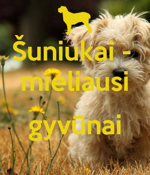 Šuniukai -  mieliausi  gyvūnai