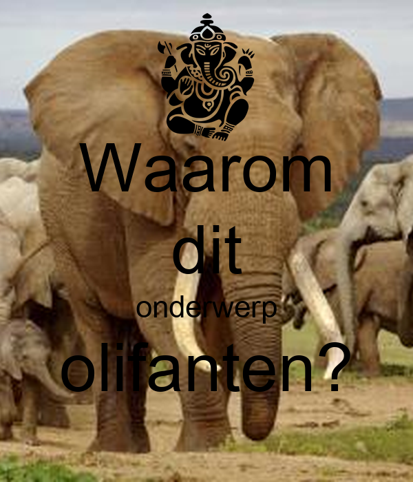 Waarom Dit Onderwerp: Waarom Dit Onderwerp Olifanten? Poster
