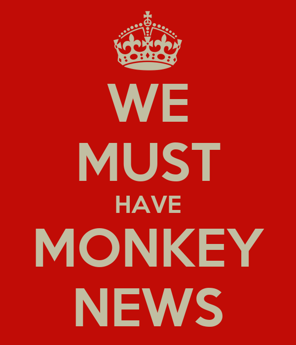 WE MUST HAVE MONKEY NEWS