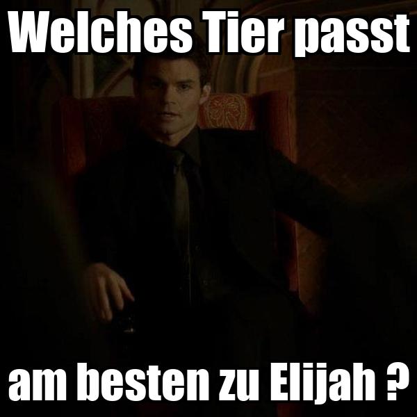 Welches Tier passt am besten zu Elijah ?