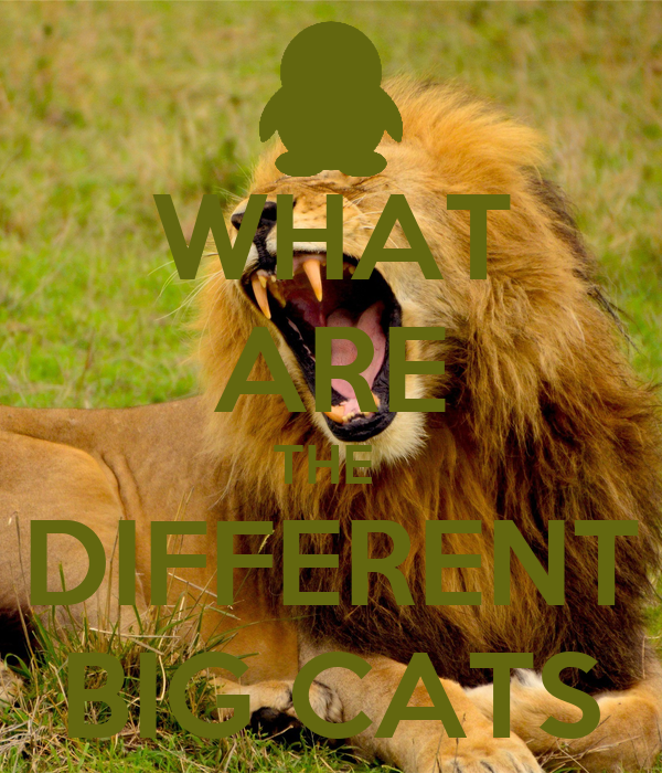 WHAT ARE THE  DIFFERENT BIG CATS