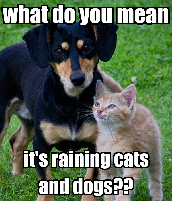 what do you mean it's raining cats and dogs??