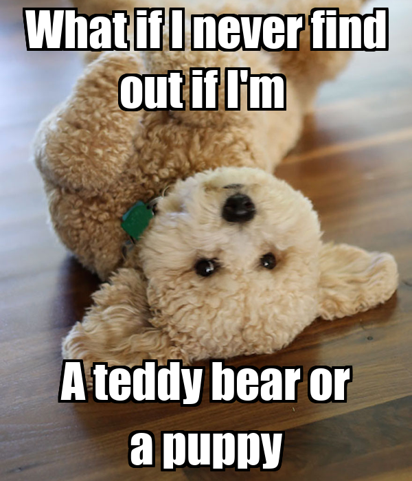 What if I never find out if I'm  A teddy bear or a puppy