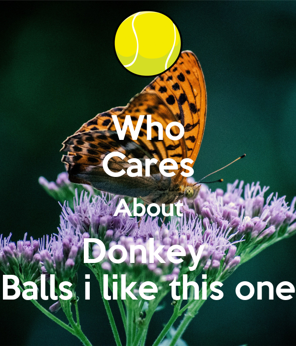 Who Cares About Donkey  Balls i like this one