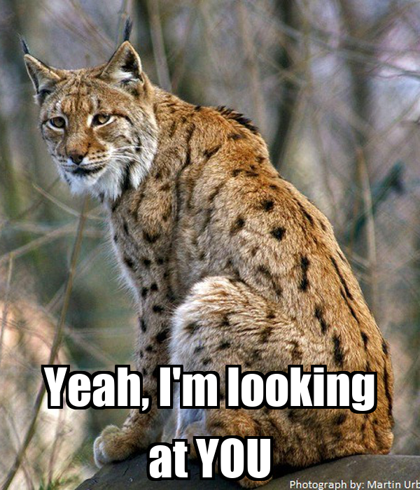 Yeah, I'm looking at YOU