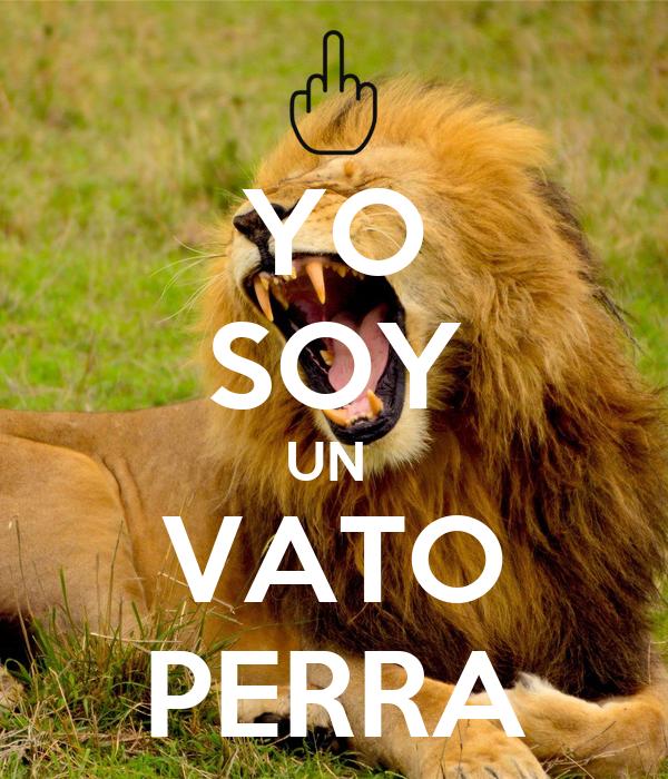 YO SOY UN  VATO PERRA