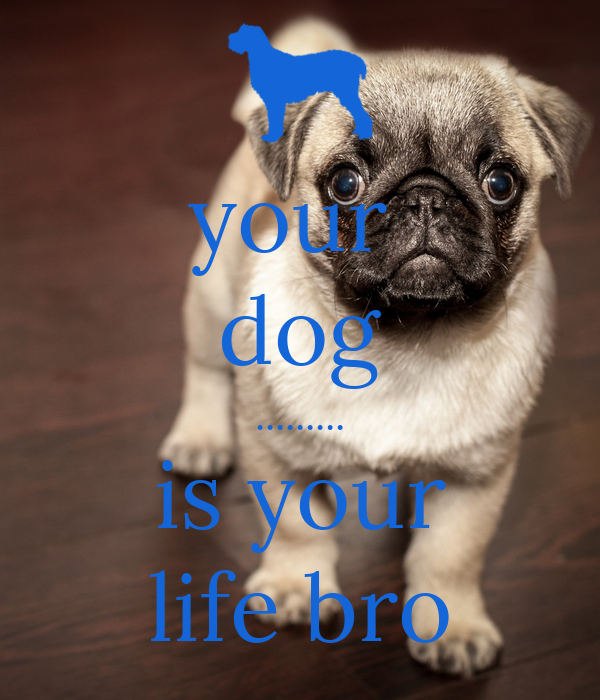 your  dog ......... is your life bro