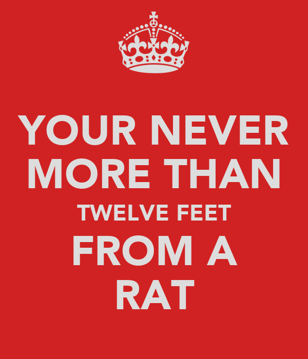 YOUR NEVER MORE THAN TWELVE FEET FROM A RAT